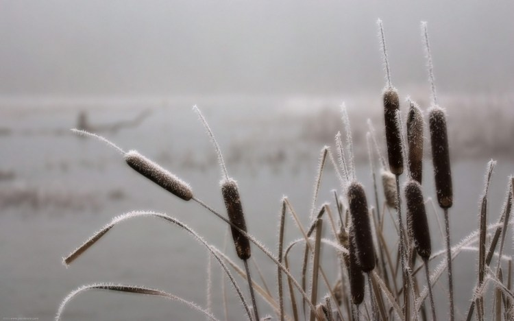 Reed_summer_desktop_background_photos